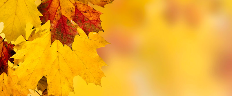 Fall (Leaves)