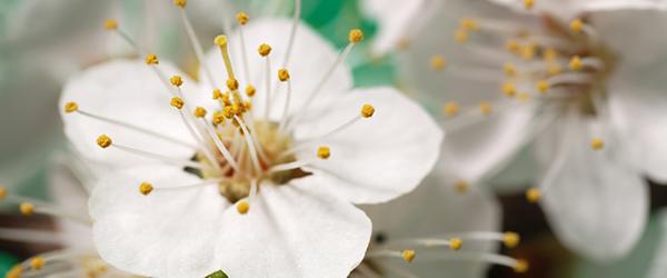 Flowers (White)